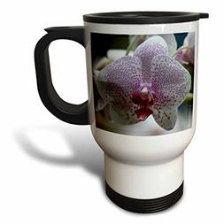 3dRose SmudgeArt Flower Art Designs - ORCHID - O - 14oz Stai